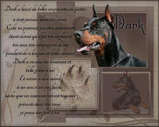Champion Dark de la Vallée de la Seine
