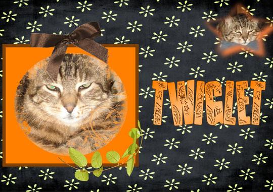 Mr Twiglet...chat des champs...