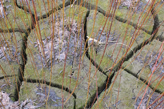 Aufnahme 18.03.2012 (So sieht der Boden am Westufer aus)