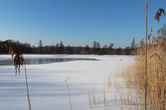 Aufnahme 01.02.2012 (ZT 3, Blick von der Nord-/Ostseite der Westseite)