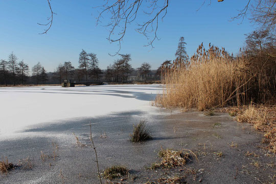 Aufnahme 01.02.2012 (ZT 3, Blick von der Nord- zur Westseite)