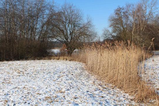 Aufnahme 01.02.2012 (Ostseite / Zulauf über Wiese)