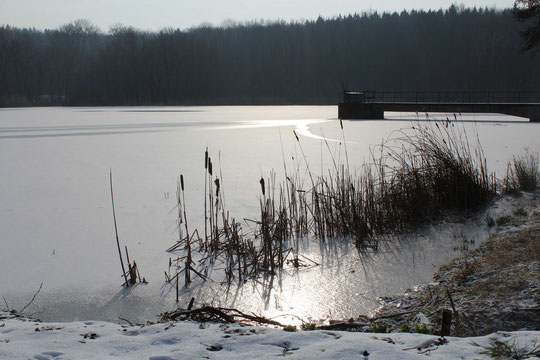 Aufnahme 31.01.2012 (ZT 3)