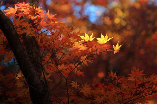 京都:宝筐院