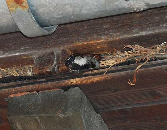 Foto: Landesbund für Vogelschutz, München