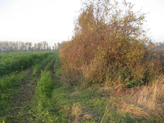 Heckenstreifen am Bruchgraben (Foto: 31.10.2010 - Kauer - )