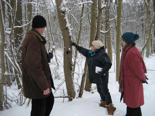 Bäume im Winter bestimmen - mitunter keine einfache Angelegenheit   (Foto: Kauer)