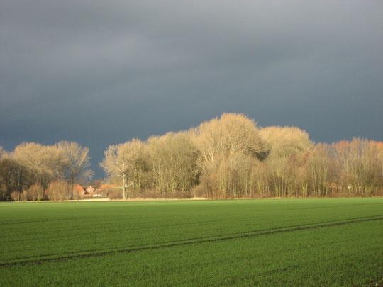 Foto: Kauer (26.12.2012)