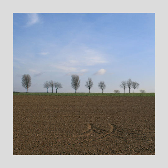 """aus: """"Bäume"""""""