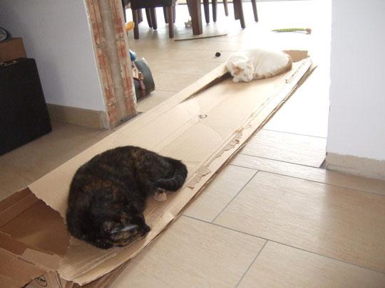 Die Katzen scheinen sich auch schon wohl zu fühlen