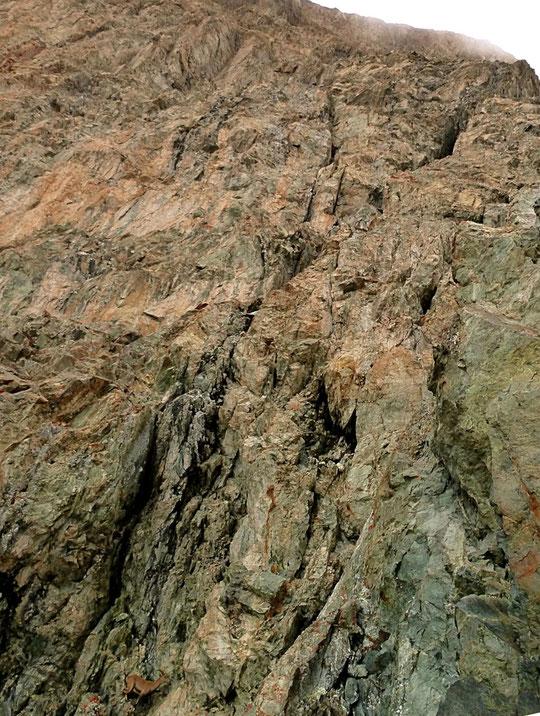 Entre le 16ème et le 17ème relais de la face Sud de la Meije, vers 3700m, un jeune bouquetin surprend les alpinistes engagés dans la voie Mayer Dibona (en bas de la photo). Photo Julien Desecures, guide de haute montagne.