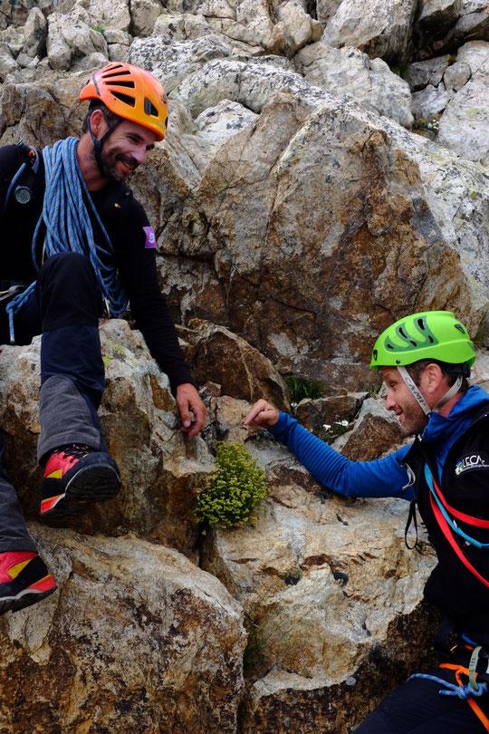 """La cordée Cédric et Seb de retour de la Meije. Ici juste à coté du refuge, la """"Saxiphrage musquée"""" (ou briseuse de roche) très répandue sur la Meije."""