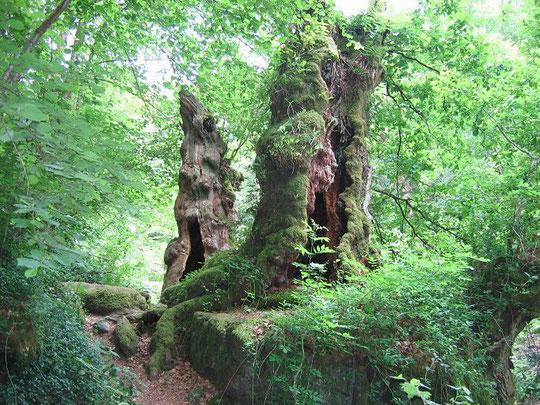 arbres morts dans chemin creux