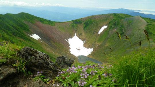 羊蹄山最高標高地点からお鉢 手前の花はイワブクロ