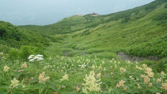 9合目上の花畑と羊蹄山避難小屋