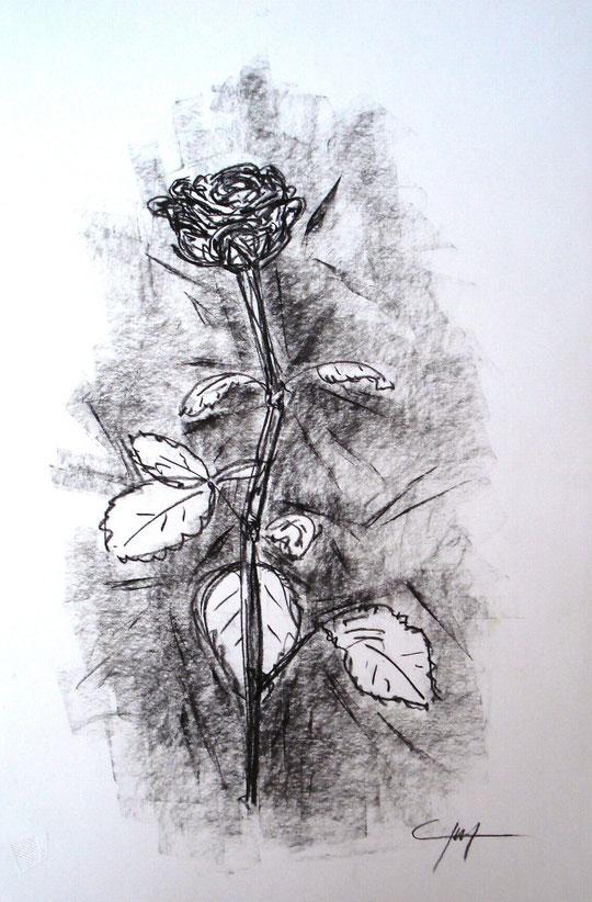 Rosa - grafite su cartoncino - 33 x 48