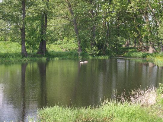 Teich auf Hof Segelhorst