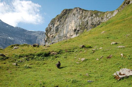 Clariden Höhenweg: das ist ein alpiner Weg = kein Weg, nur Markierungen