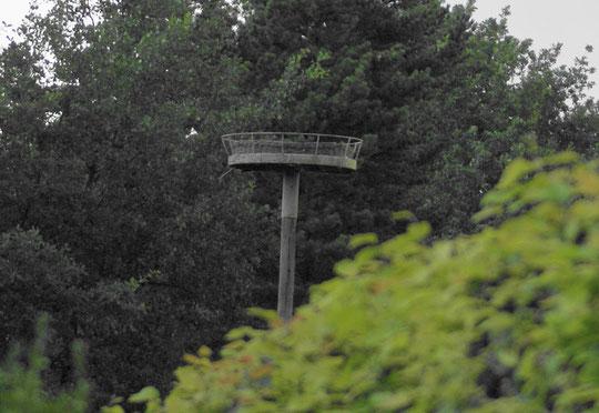 Nest der Familie Lüder Herbst 2008
