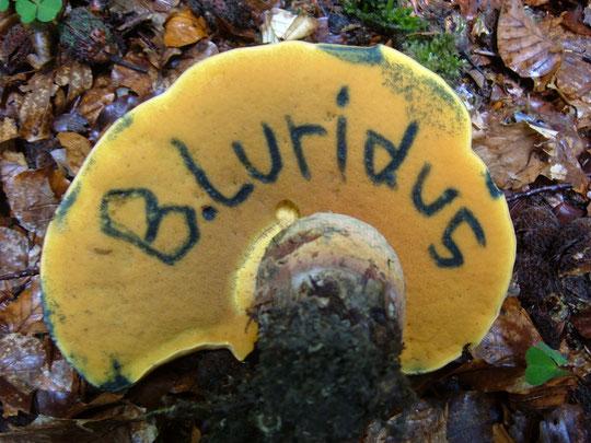 Antabus Syndrom , Pilzvergiftung, Anzeichen einer Pilzvergiftung