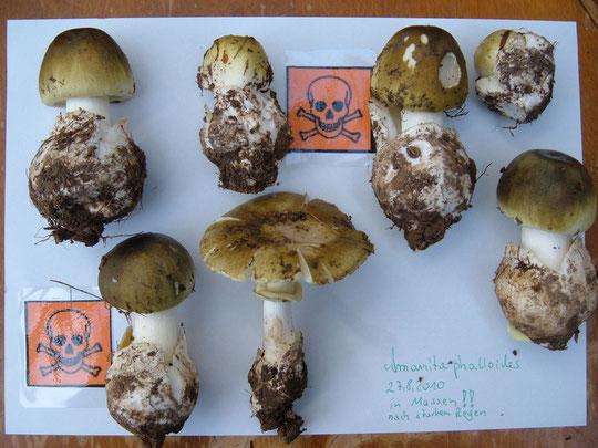 Pilze erkennen , Solling Pilze