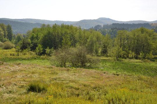 Vue sur les Vosges du Nord depuis nos prairies