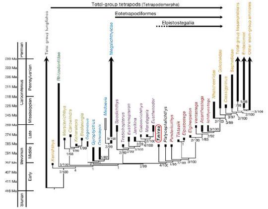 図2.四肢様魚類と四肢類の分岐系統図