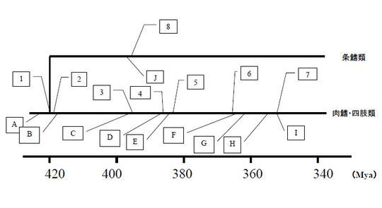 図1.脊椎動物の陸棲化の過程