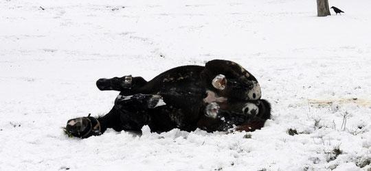 Schnee ist sooooo toll zum Wälzen!!!