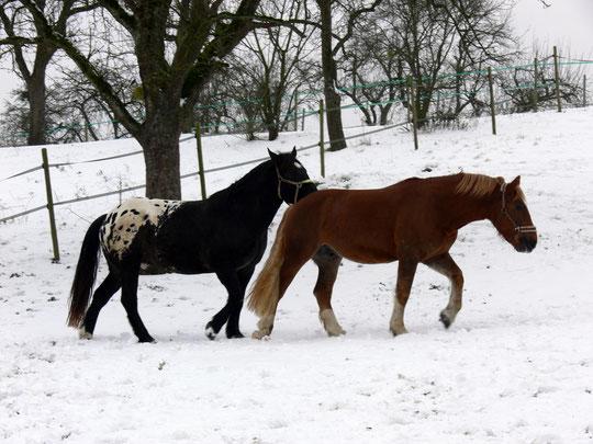 Im Schnee auf der Weide
