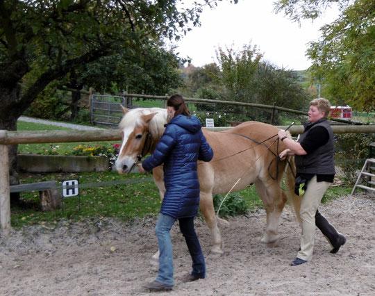 Fummel, fummel - Cathrin gibt Hilfestellung zum Schulterherein