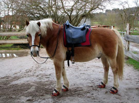 Mein wunscherhübsches Pony