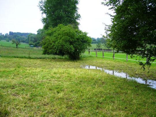 Die Weide steht nicht mehr so arg unter Wasser