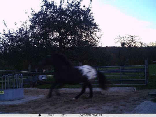 Ein aufgeregter Kurt, während Amor und ich uns warmlaufen (auf dem Wiesenweg sind wir noch zu sehen)