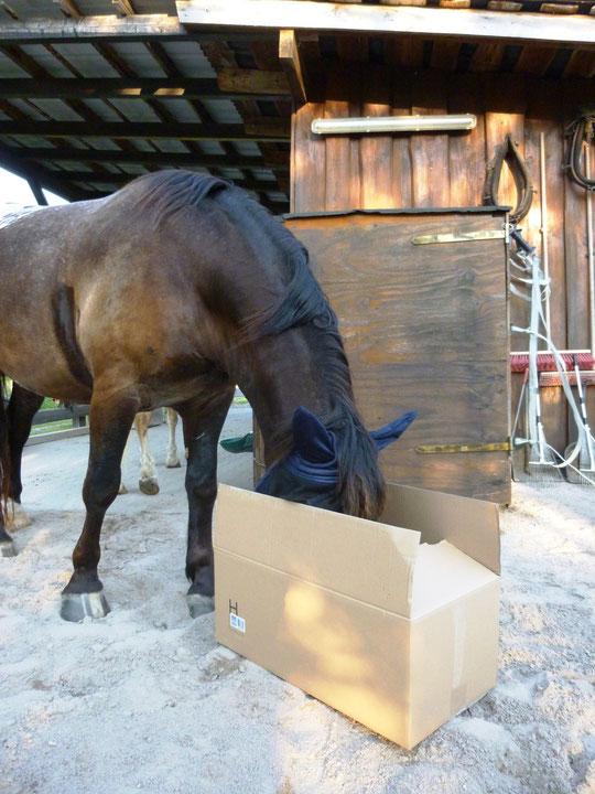 Es kam ein Paket vom Pferdesportversandhaus - so hat Kurti mal wieder für ein paar Tage ein neues Spielzeug