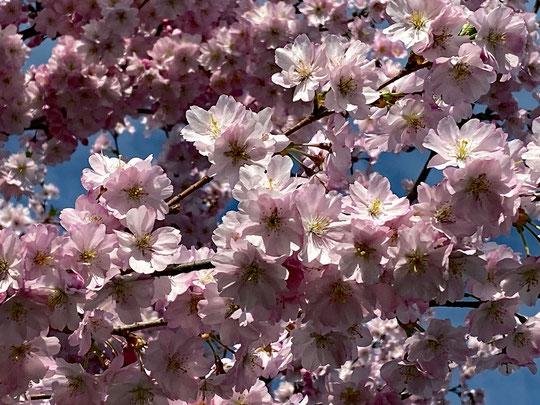 Frühling! :-)