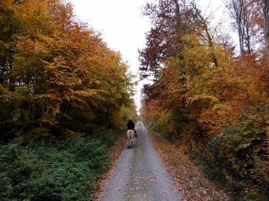 Gerret und Amor unterwegs im Herbstwald