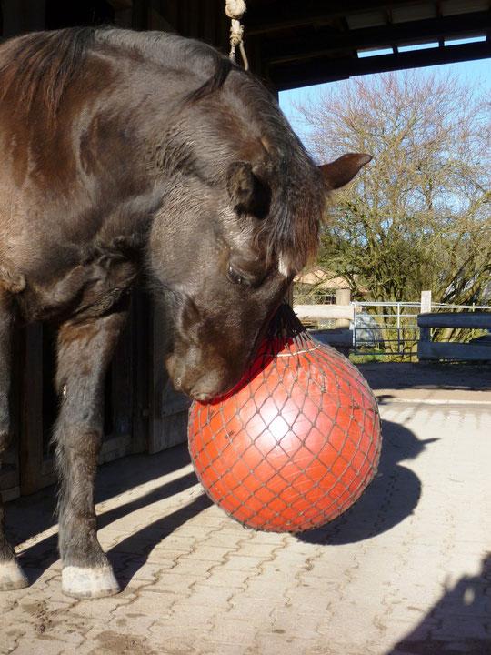 Kurti am weiterentwickelten Gymnastik-Leckerli-Ball :-)