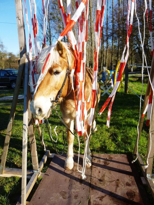 Mein mutiges Pony