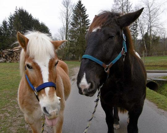 Die Jungs mit den vor kurzem neu gekauften Halftern. Amor findets bäh, Kurti laaaangweilig. ;-)