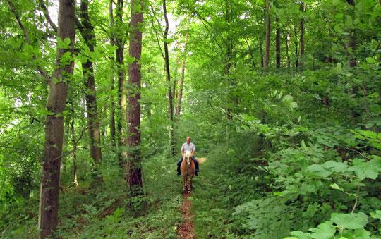 Trampelpfade im Wald