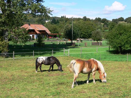 Mittags auf der Weide - im Hintergrund das Rehgehege vom Nachbarhof