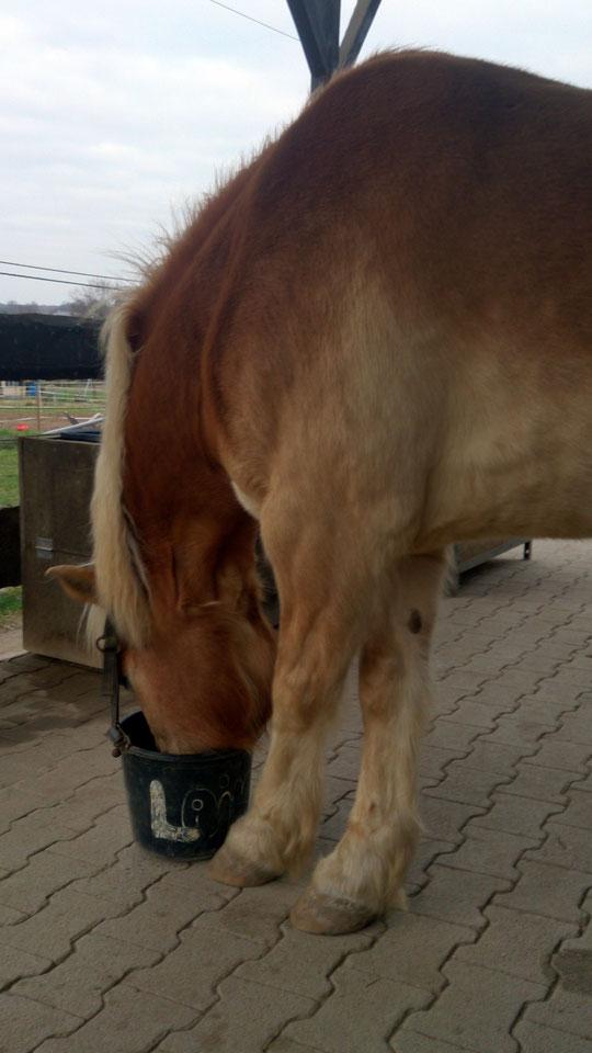 Hoffentlich fällt das Pony net um...! *staun*
