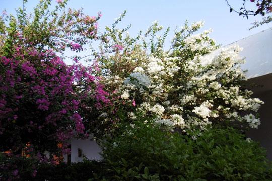 Der Blick aus unserer Zimmertür - Blumen über Blumen