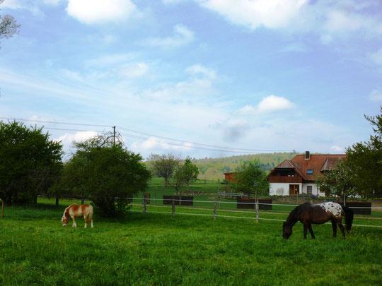 Zwei Pferds auf der Weide :-)