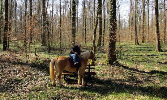Von der Bank aufs Pferdchen ;-)