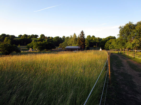 Blick über die zwischenzeitlich hochgewachsenen Weiden Nr. 1 und 2 in Richtung Stall