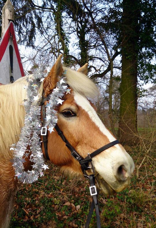 Ein mit einer im Wald gefundenen Weihnachtsgirlande dekorierter Hafi ;-)