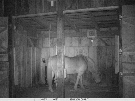 Nachts im Stall, 01:58 Uhr - und 8°C...