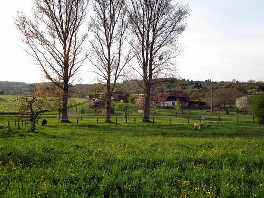 Zwei kleine Pferde auf einer großen Weide - Weide Nr. 3